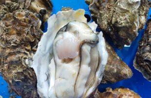三河湾天然セル牡蠣